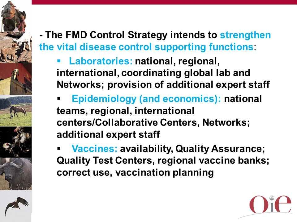- The FMD Control Strategy intends to strengthen the vital disease control supporting functions: