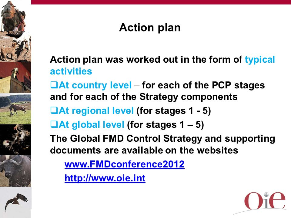 Action plan Action plan was worked out in the form of typical activities.