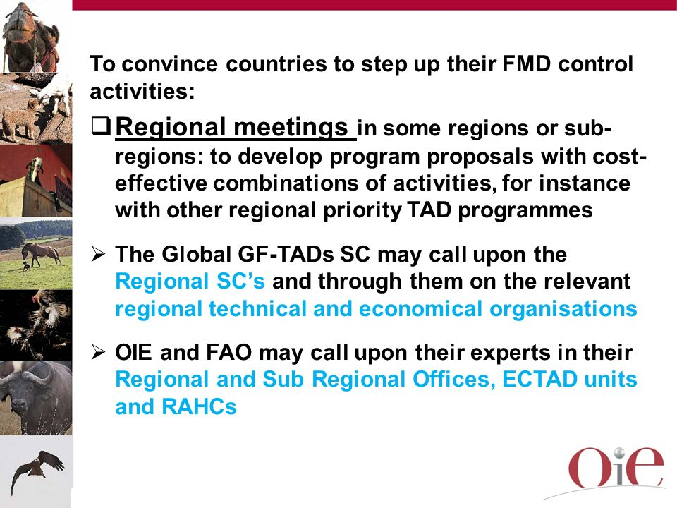 To convince countries to step up their FMD control activities: