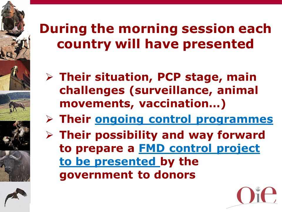 During the morning session each country will have presented