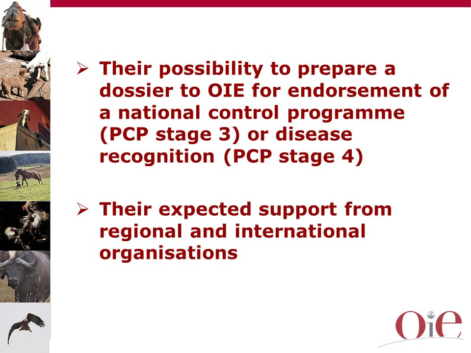 Their expected support from regional and international organisations