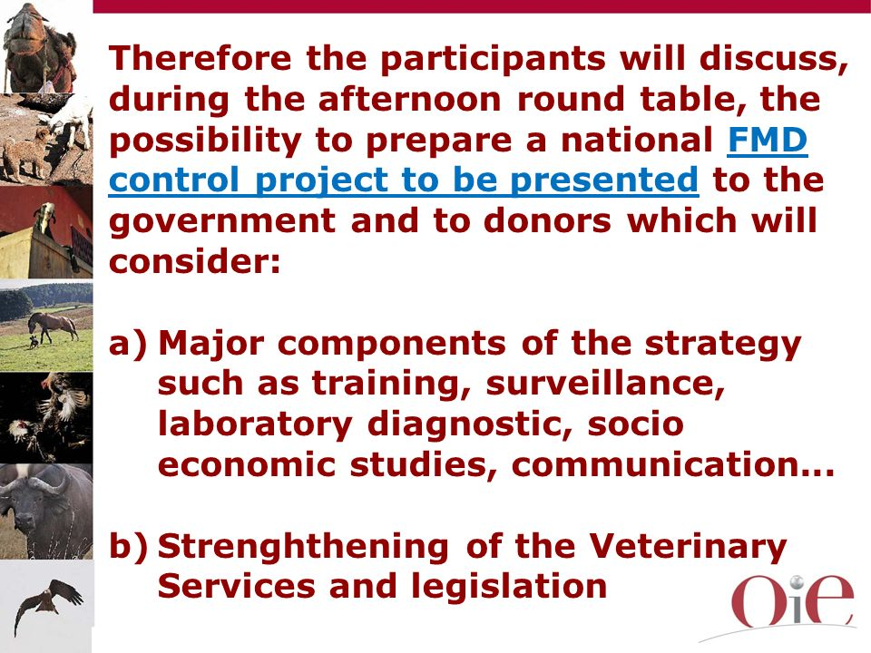 Therefore the participants will discuss, during the afternoon round table, the possibility to prepare a national FMD control project to be presented to the government and to donors which will consider: