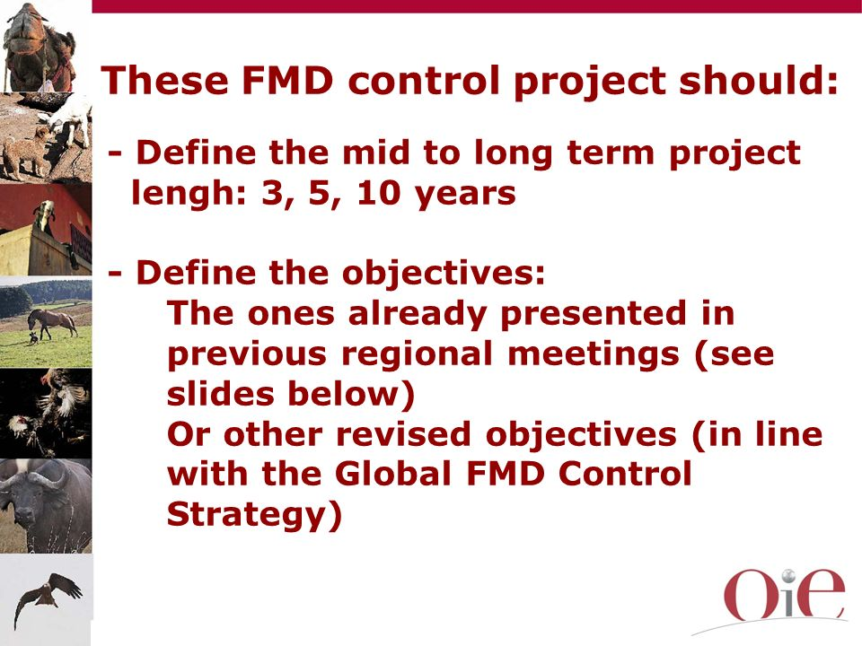 These FMD control project should: