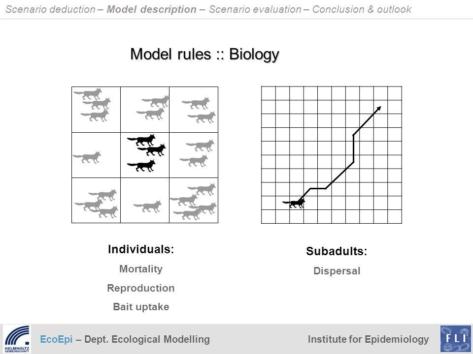 Model rules :: Biology Individuals: Subadults: