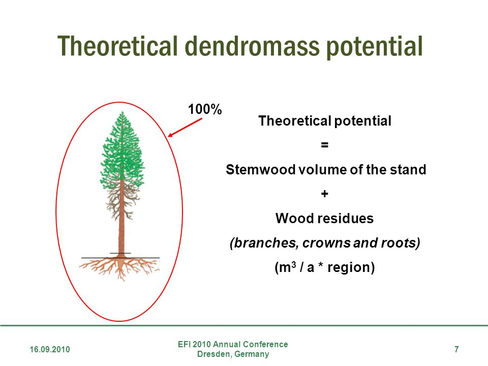 Theoretical dendromass potential