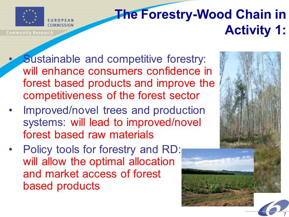 The Forestry-Wood Chain in Activity 1: