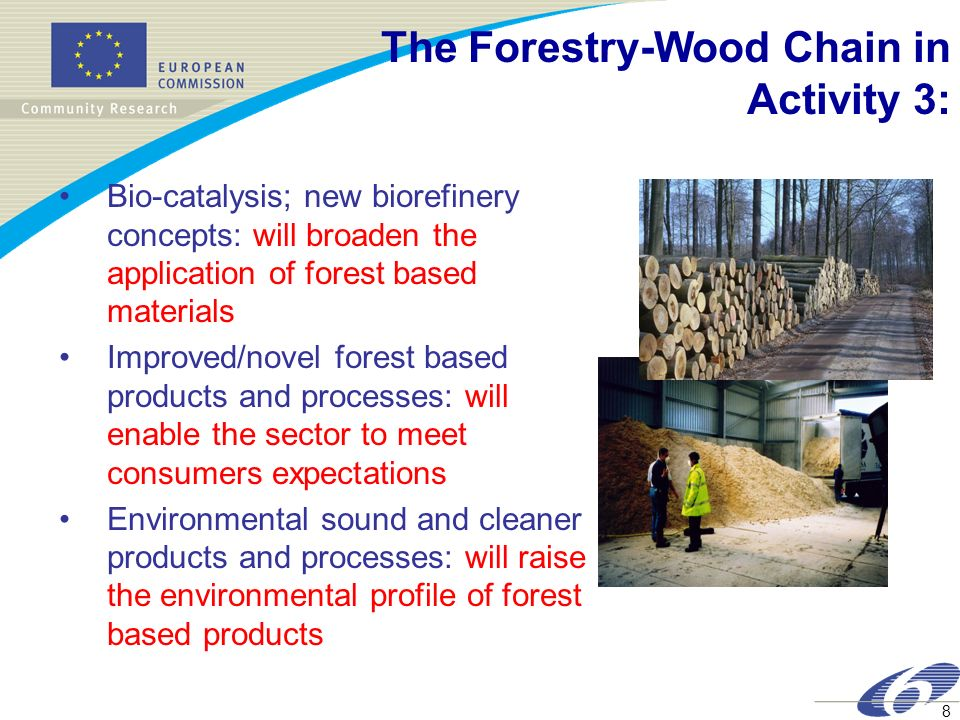 The Forestry-Wood Chain in Activity 3: