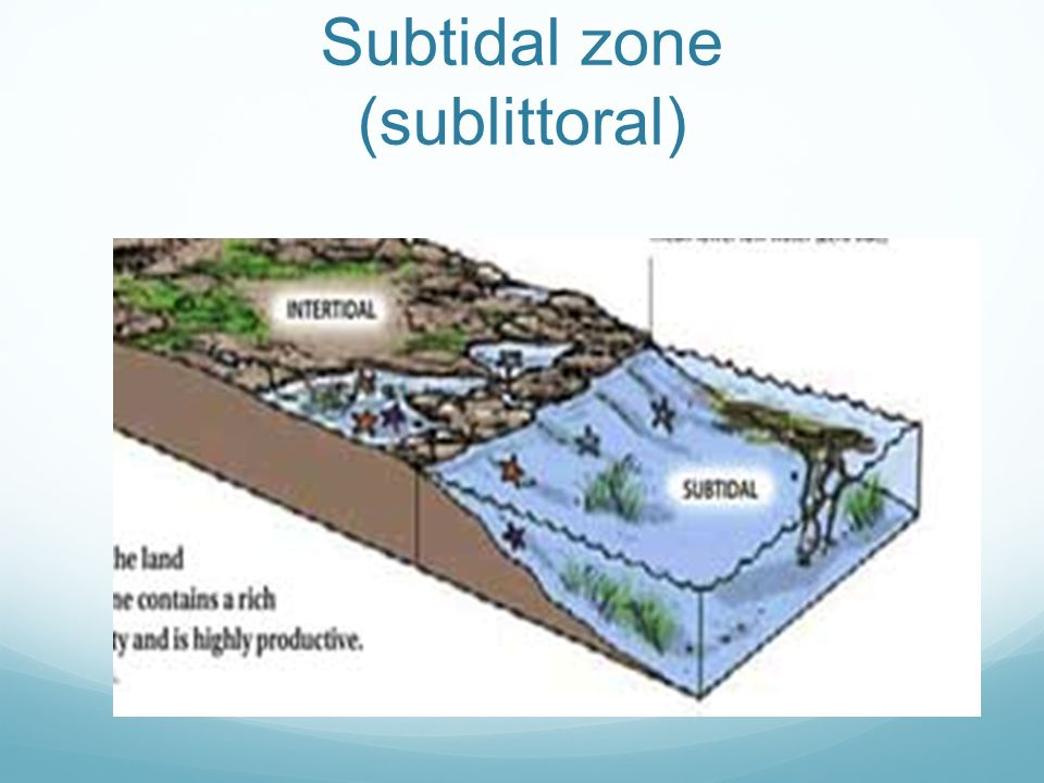 Subtidal zone (sublittoral)