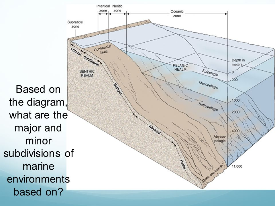 Based on the diagram, what are the major and minor subdivisions of marine environments based on
