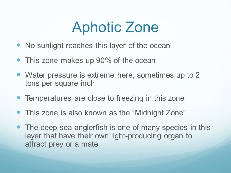Aphotic Zone No sunlight reaches this layer of the ocean