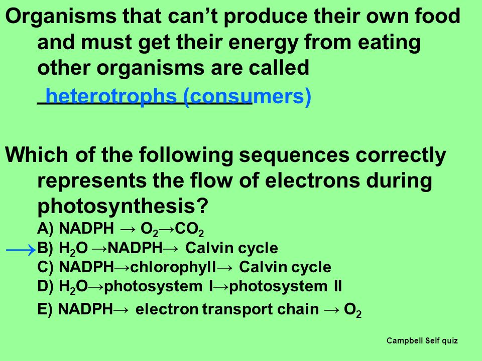 What Kind Of Organisms Can Produce Their Own Food