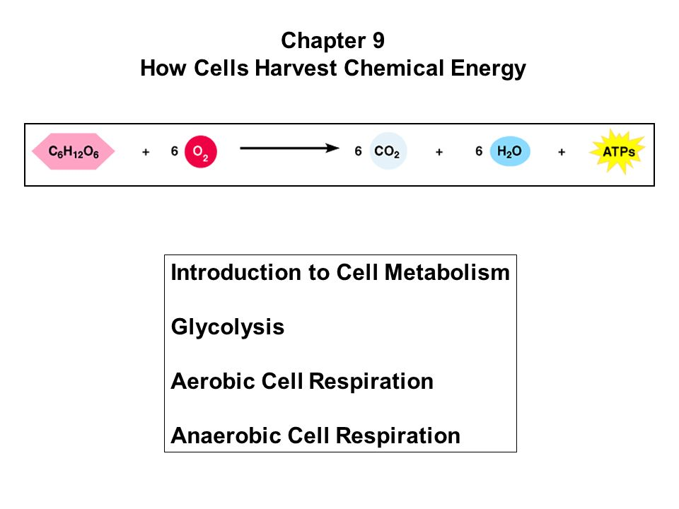 how cells harvest chemical energy 61) photosynthesis and cellular respiration provide energy for life 1 photosynthesis-uses the energy of sunlight to rearrange these reactants: co2 and h2o, to create glucose and o2.