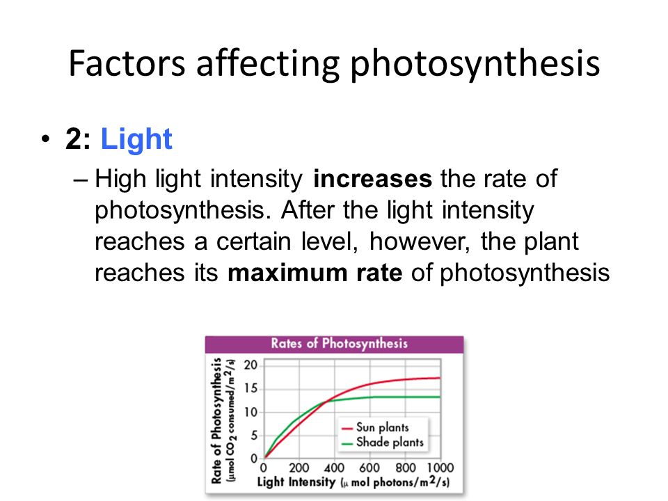 Factors Affecting The Rate Of Photosynthesis Biology Essay