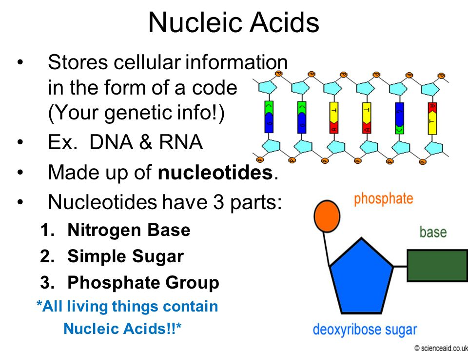 Nucleic Acids Stores cellular information in the form of a code (Your genetic info!) Ex. DNA & RNA.