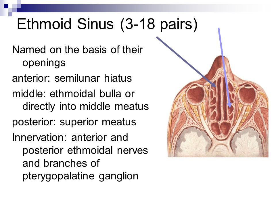 how to fix sinus infection