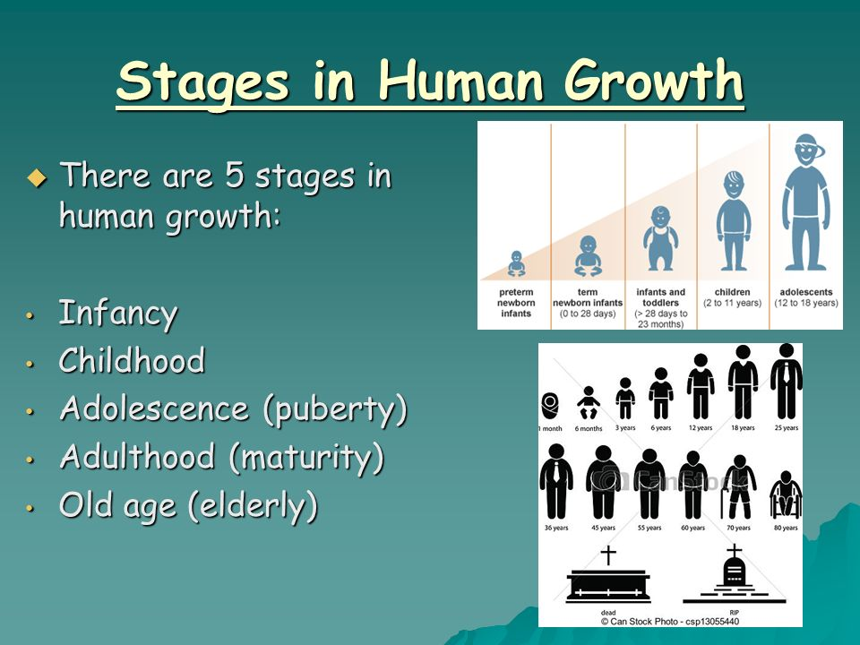 Human growth stages