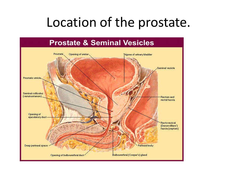rückenschmerzen bei prostatitis amoxicillin.jpg