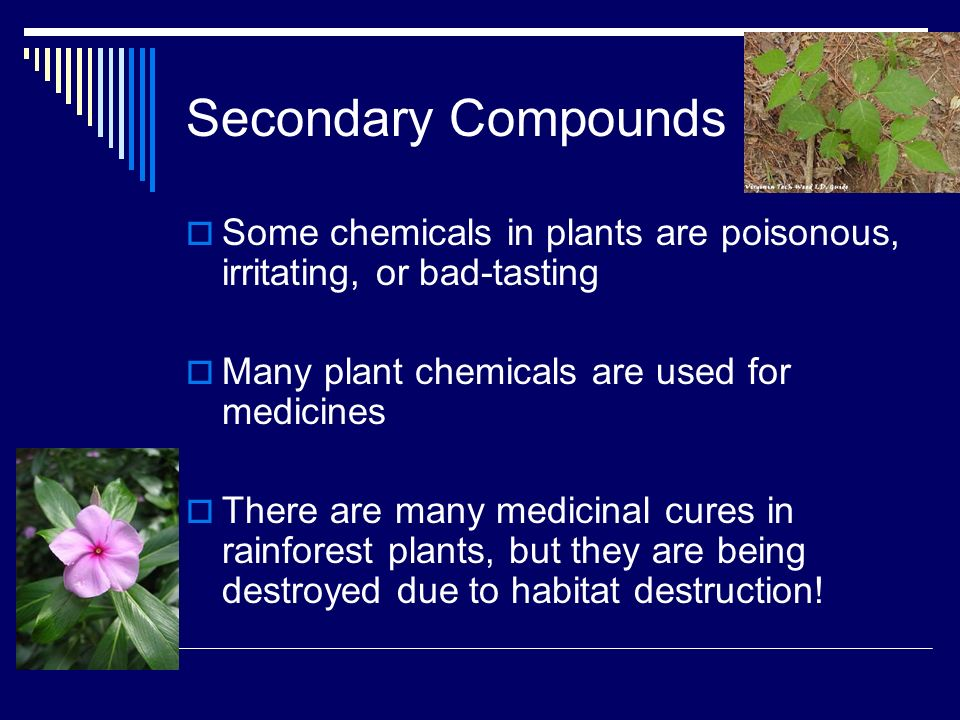 the effects of secondary plant compounds Although several studies have been published indicating the effect of seasons on secondary plants effect of international journal of recent.