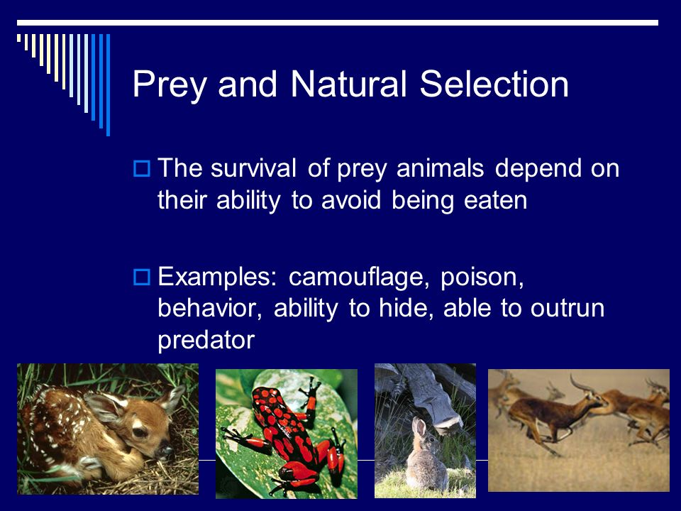 Chapter 21 Community Ecology Ppt Video Online Download