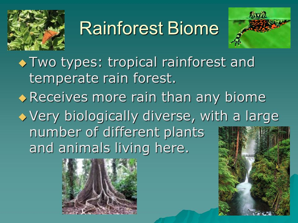 different types of tropical rain forest Tropical rain forests are the most complex and diverse ecosystems, and sustain  the greatest concentration of biological diversity (half of all species of animals.