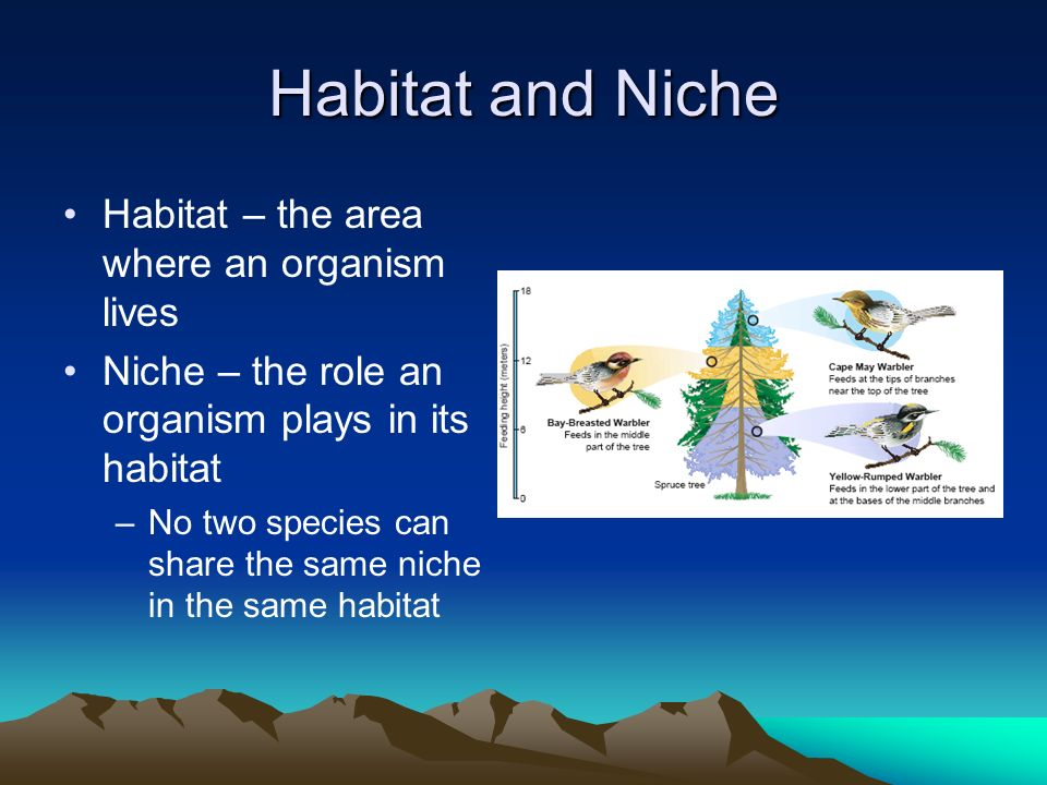 Habitat and Niche Habitat – the area where an organism lives