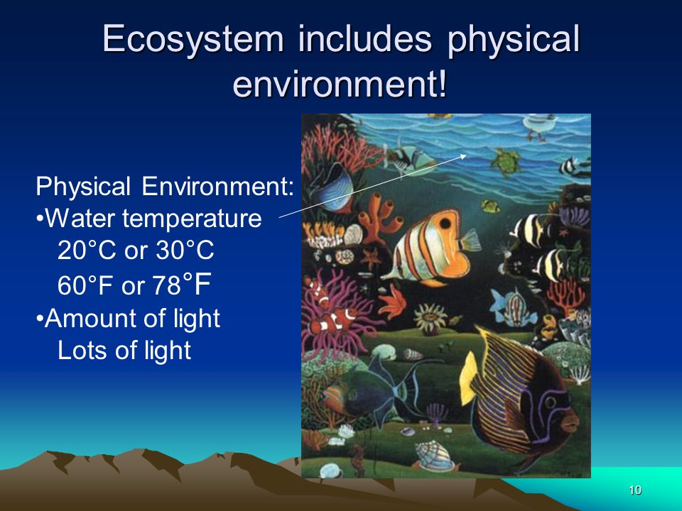 Ecosystem includes physical environment!