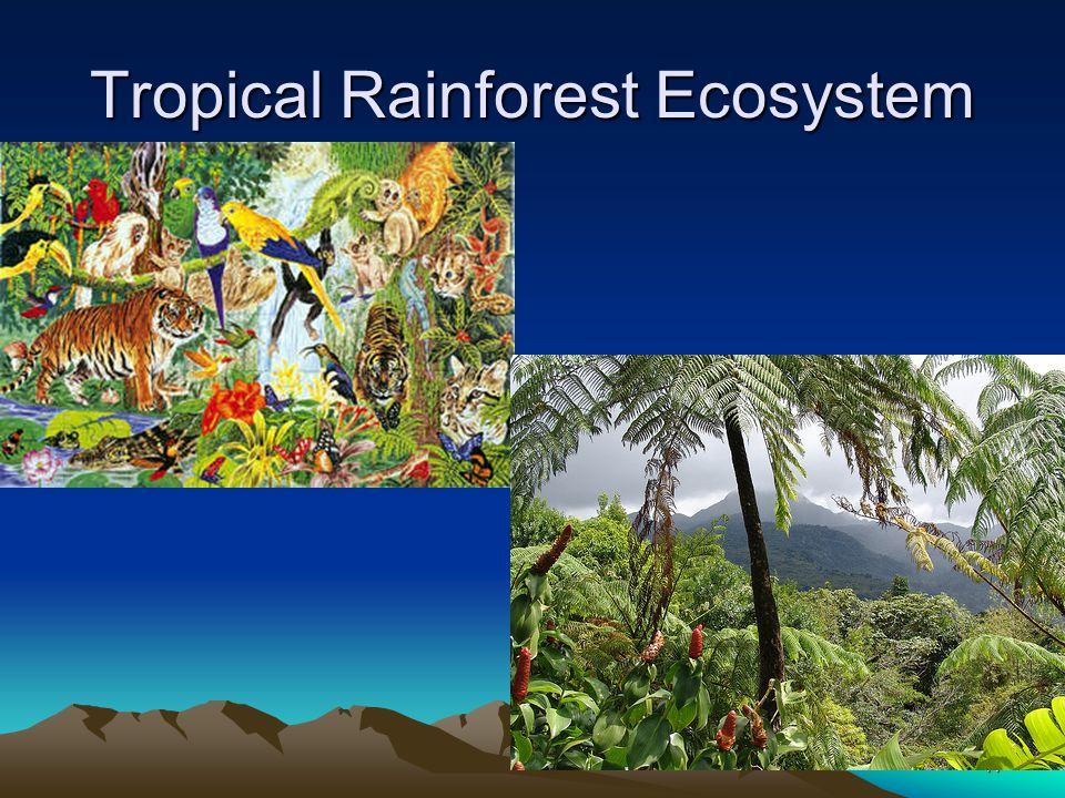 Tropical Rainforest Ecosystem