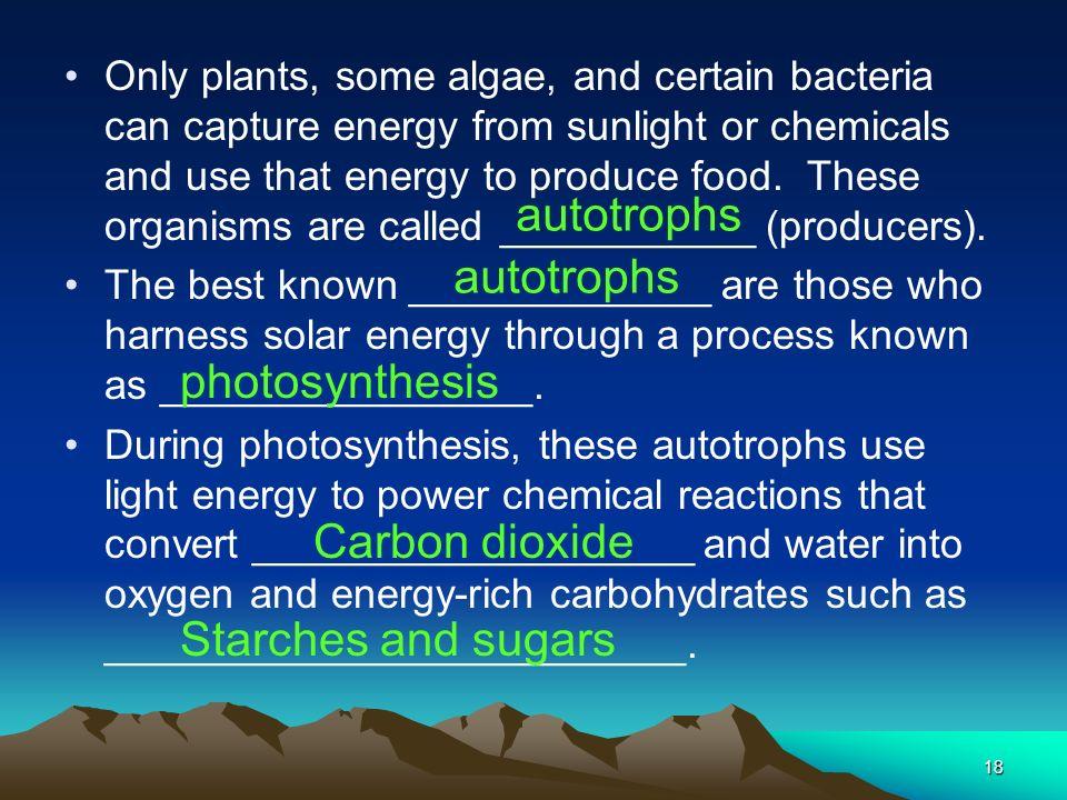 autotrophs autotrophs photosynthesis Carbon dioxide