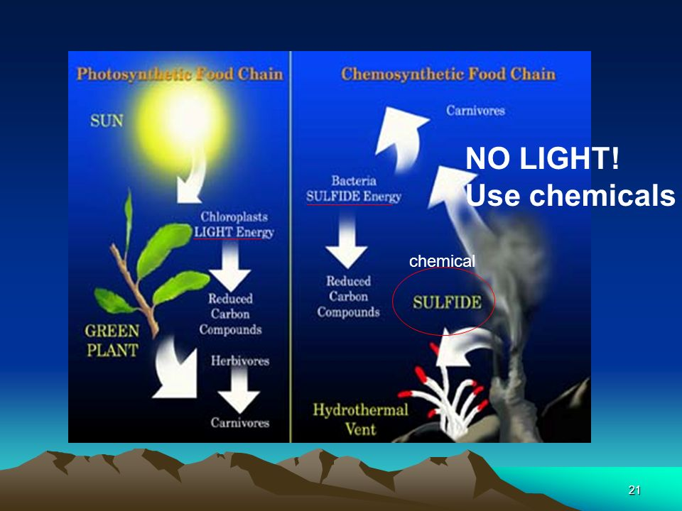 NO LIGHT! Use chemicals chemical