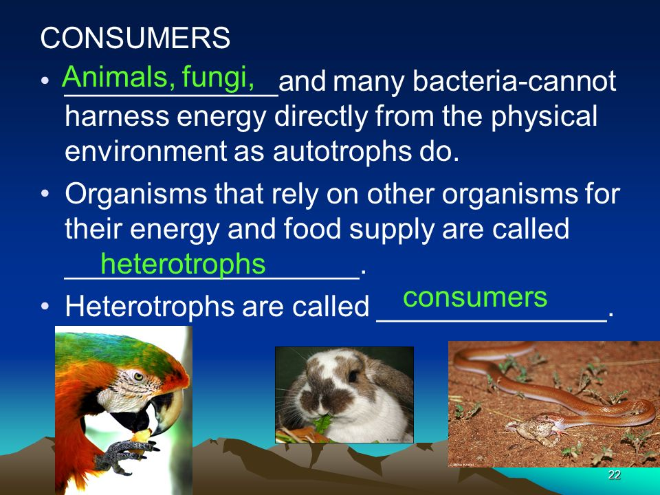 CONSUMERS _____________and many bacteria-cannot harness energy directly from the physical environment as autotrophs do.