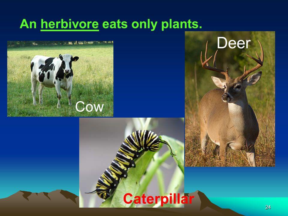 An herbivore eats only plants.
