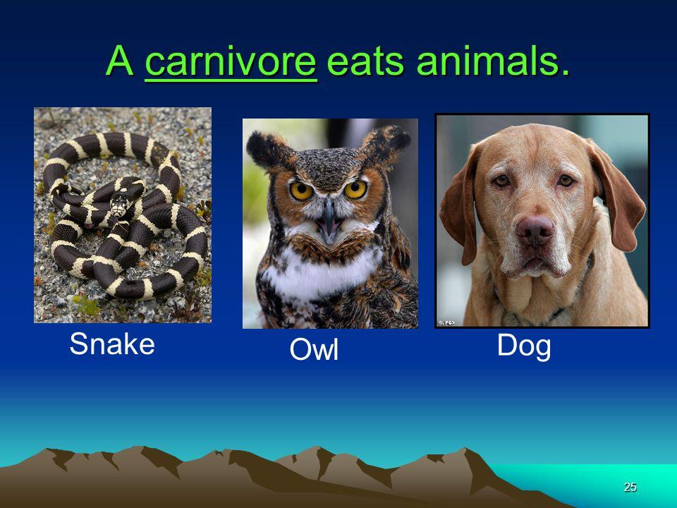 A carnivore eats animals.