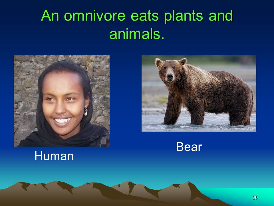 An omnivore eats plants and animals.