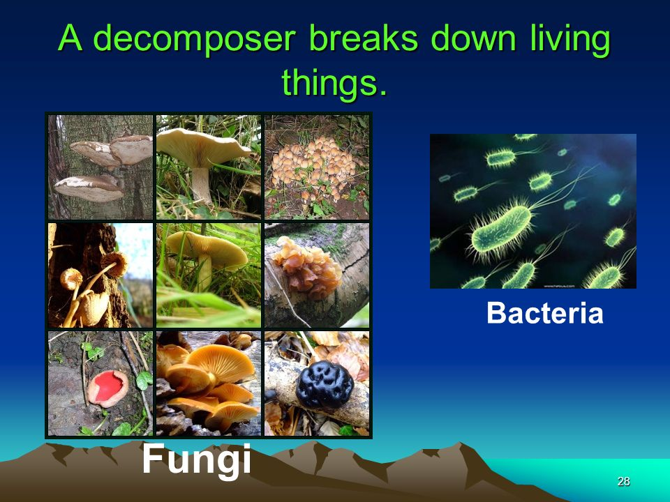 A decomposer breaks down living things.