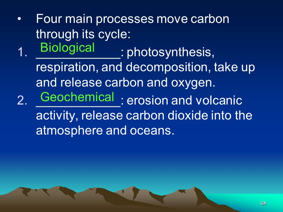 Four main processes move carbon through its cycle: