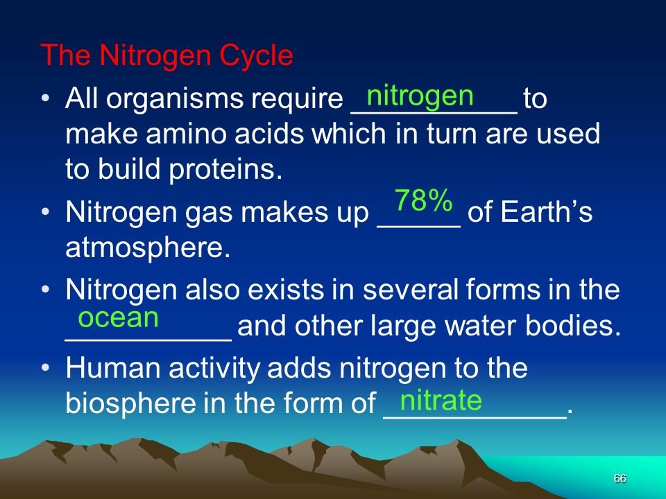 The Nitrogen Cycle All organisms require __________ to make amino acids which in turn are used to build proteins.