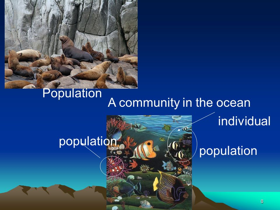 Population A community in the ocean population individual