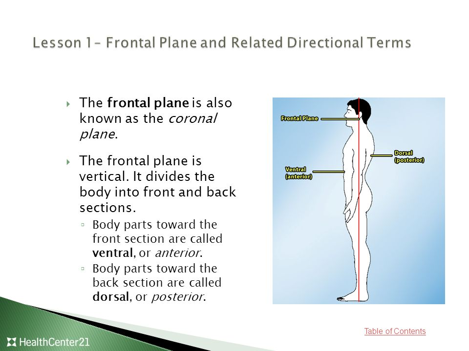 Lesson 1– Frontal Plane and Related Directional Terms