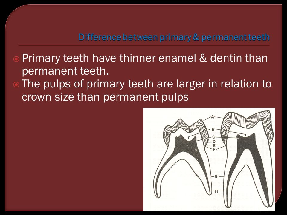 Difference between primary & permanent teeth