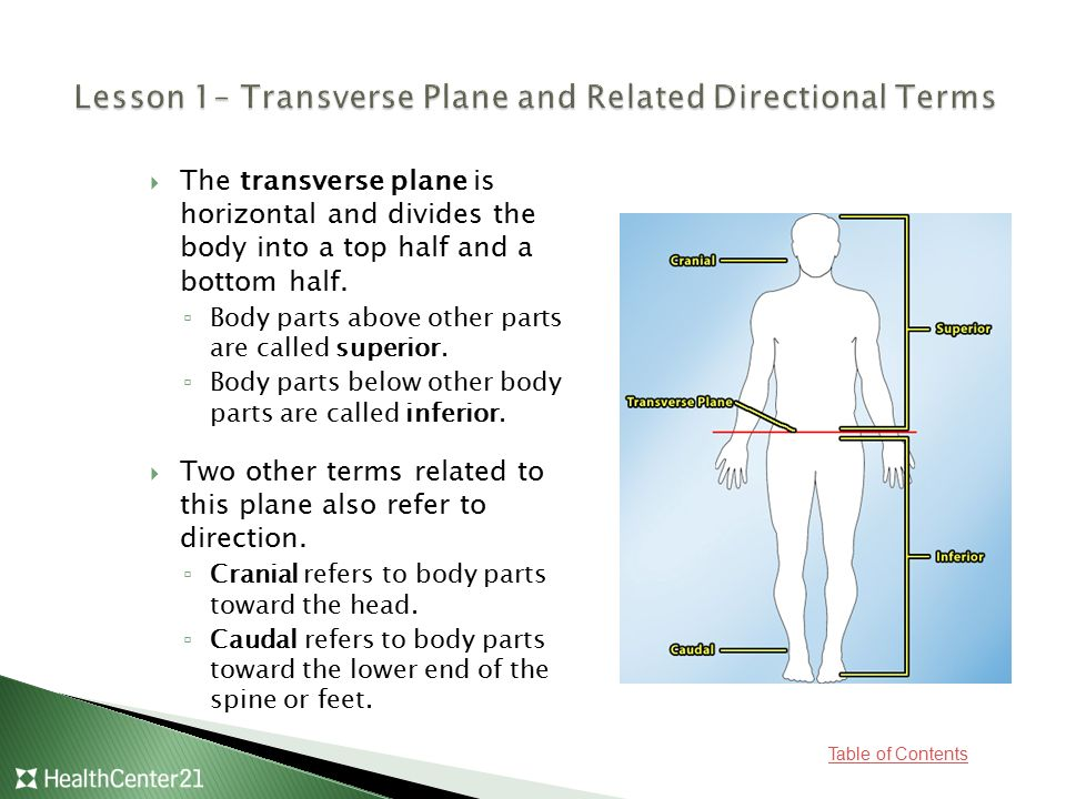 Lesson 1– Transverse Plane and Related Directional Terms