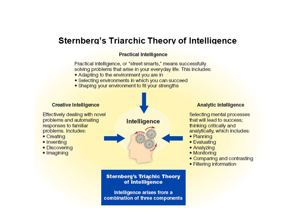 sternberg s triarchic theory of intelligence Introduction the focus of the assignment will be on gardners theory of multiple intelligences and sternbergs triarchic theory of intelligences.