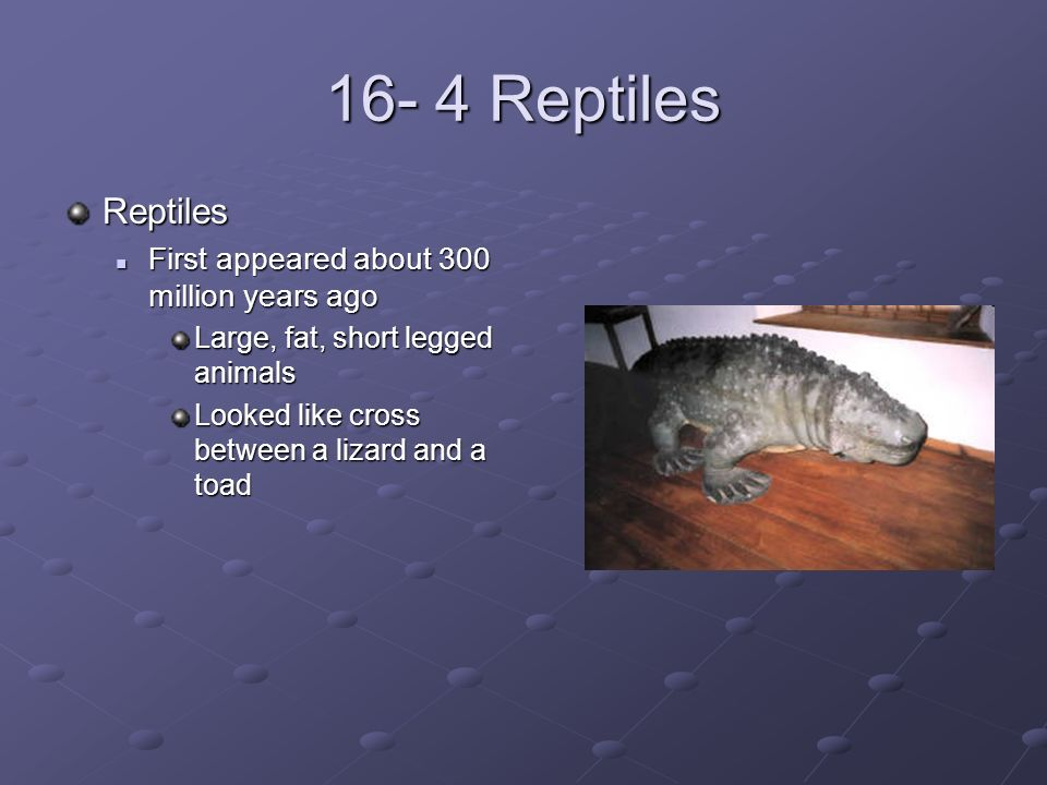 Fishes, Amphibians, and Reptiles - ppt download
