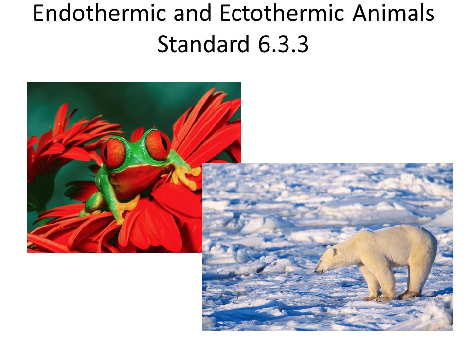 an analysis of adaptions on ectothermic and endothermic animals to extreme climates
