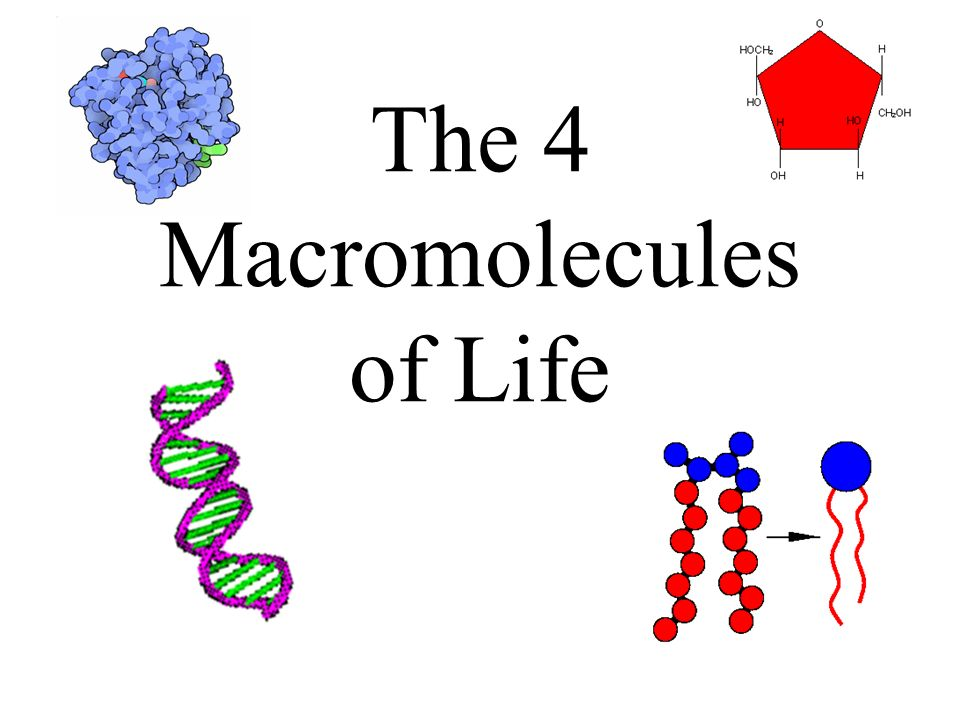 macromoleules of life