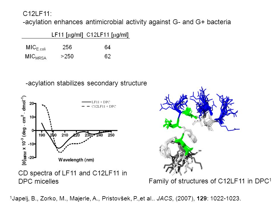 -acylation enhances antimicrobial activity against G- and G+ bacteria