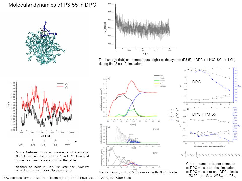 Molecular dynamics of P3-55 in DPC