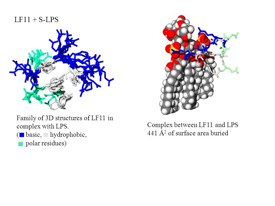 LF11 + S-LPS Family of 3D structures of LF11 in complex with LPS.