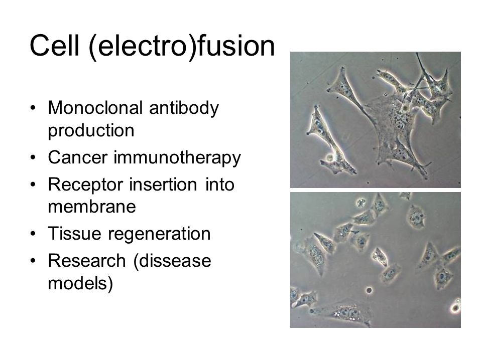 Cell (electro)fusion Monoclonal antibody production