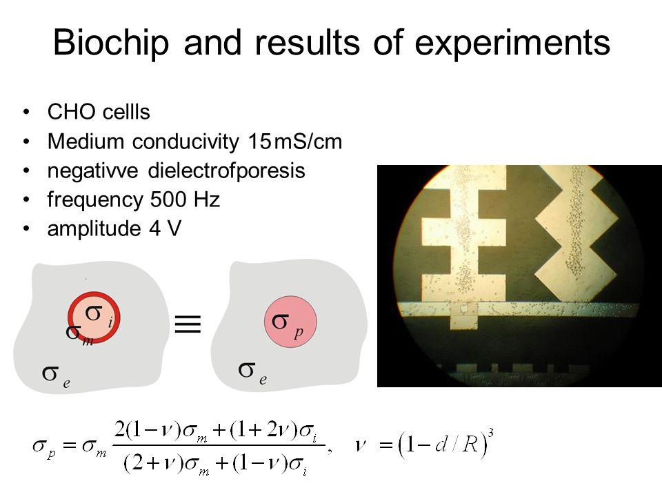 Biochip and results of experiments