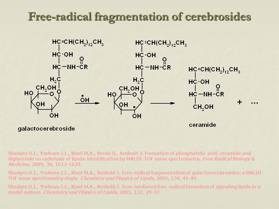 Free-radical fragmentation of cerebrosides